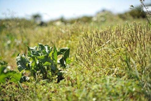 Una oportunidad para aprender agroecología