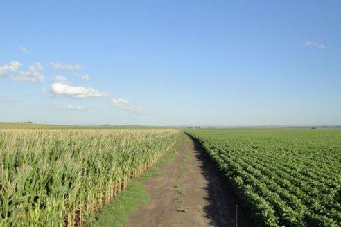 Elevan proyecciones de cosecha argentina en soja y maíz