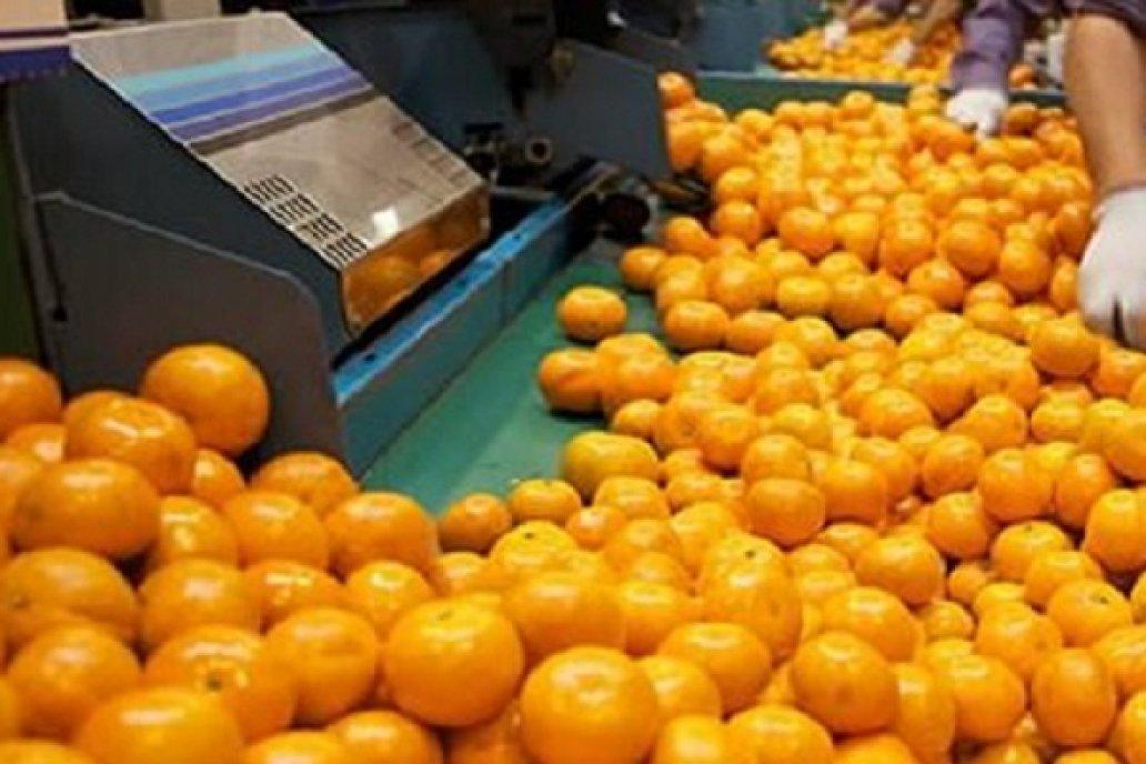 Desde FeCiER formularon un pedido a productores por envío de fruta sin madurar
