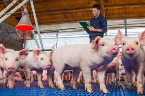 Un guiño al sector: bajan las retenciones a la carne de cerdo