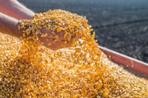 Entre Ríos tuvo la máxima superficie y producción de maíz de los últimos 20 años