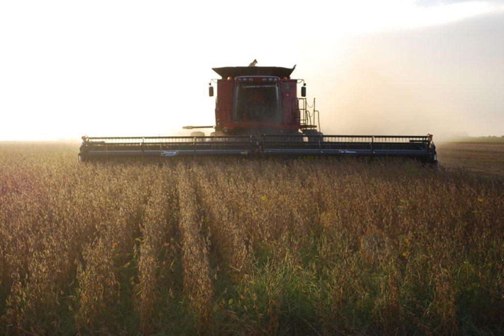 Se estima una caída del 25% en la producción de soja en Entre Ríos
