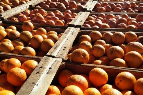 """El sector citrícola denuncian """"trabas imprevisibles e injustificadas"""" que afectan la exportación"""