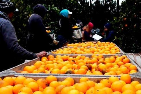 La oferta de cítricos, en problemas por municipios que impiden el paso de camiones