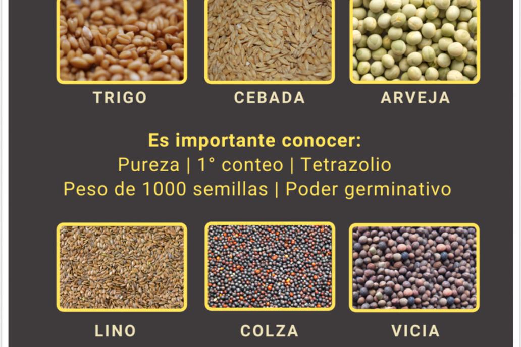 Pensando en la fina: Tiempo de controlar la calidad de las semillas
