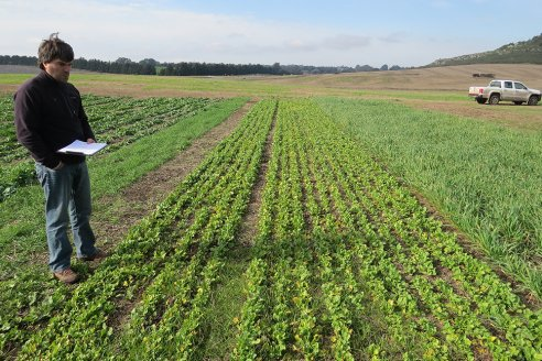 Recomendaciones para una siembra tardía de praderas