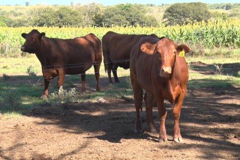 La Hortensia, una producción mixta en el centro-oeste entrerriano
