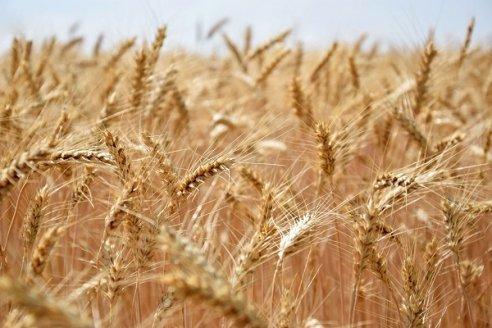 Efecto sequía: subas para el trigo luego de alcanzar un máximo desde octubre de 2014