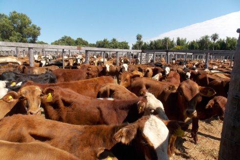 Santa Fe retoma los remates físicos de hacienda bovina