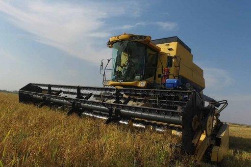El rinde promedio del arroz fue de 7.677 kilos por hectárea, un récord