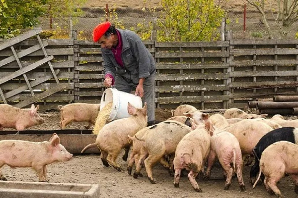 Campo: 31 cadenas agroalimentarias generan más de 2 millones puestos de trabajo