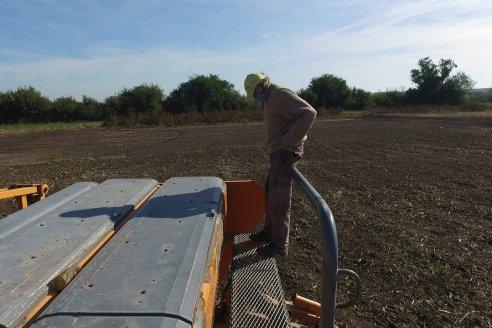 CARINATA, una opción novedosa dentro de los cultivos de invierno