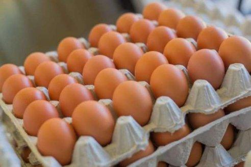 Productores avícolas proponen puntos de venta de huevos a bajo precio