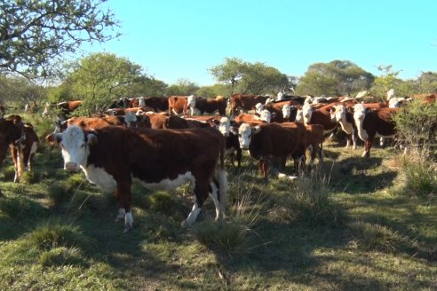 Exitoso debut de un fideicomiso ganadero que promete 10% anual