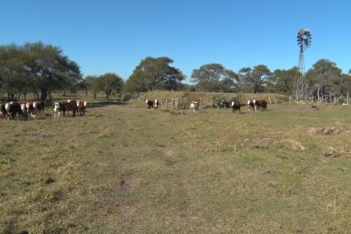 El Guaraniná: ganadería sustentable con manejo integral y regenerativo de los ecosistemas