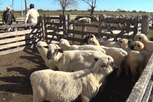 Estancia La Angélica: una puesta en valor de la producción de lana y carne