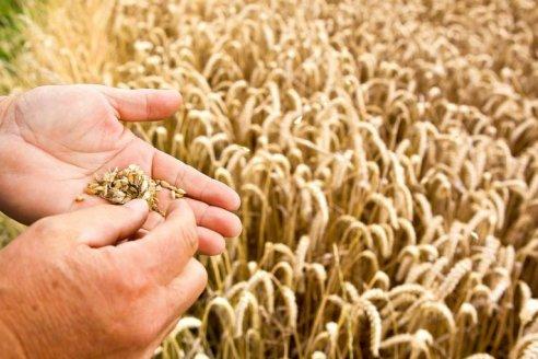 BASF lanza el herbicida Luximo con un nuevo modo de acción