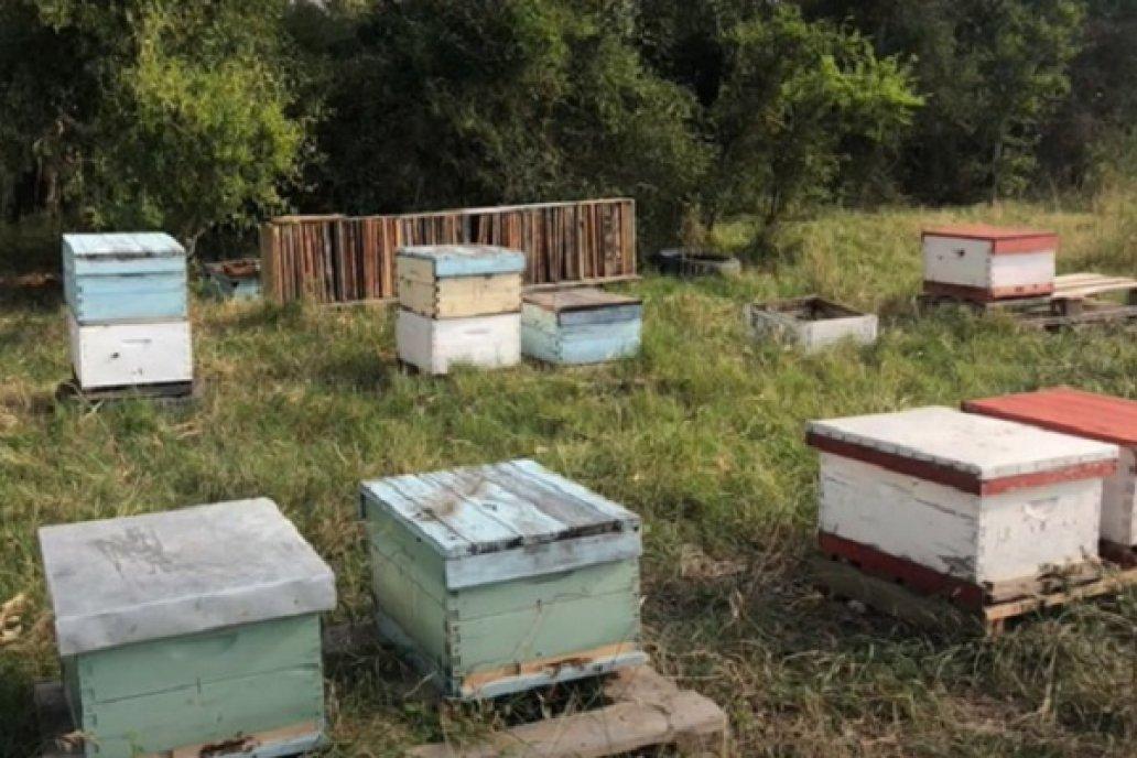 Preparación del apiario para la invernada