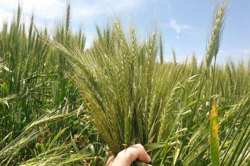 Planes de siembra: se va a implantar todo lo que sea posible