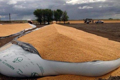 Entidades del agro reclaman mayor seguridad tras los ataques a silobolsas
