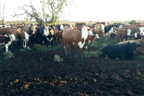 """""""Si dejas rancho solo por un rato, a la vuelta seguro que algo te falta"""", afirmó un productor"""