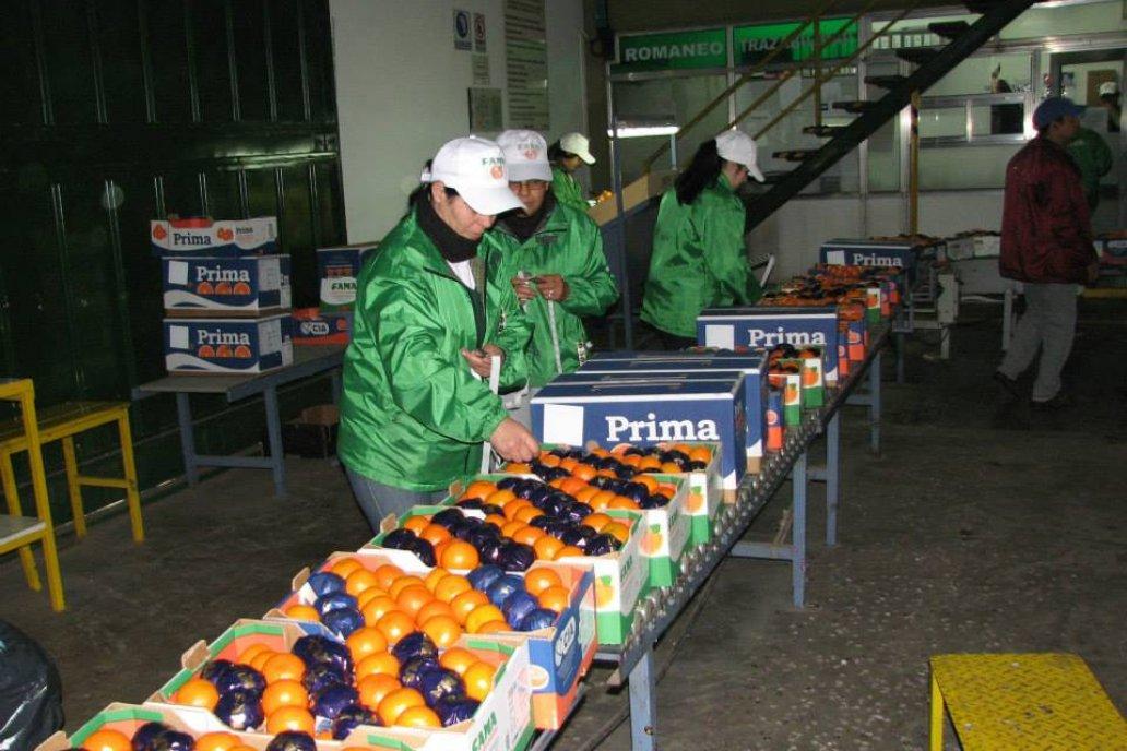 Se continua gestionando el ingreso de cítricos dulces entrerrianos al EEUU