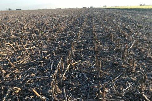 Hay seis, pero se recurre solo a tres: en maíz, se rota con la mitad de los herbicidas