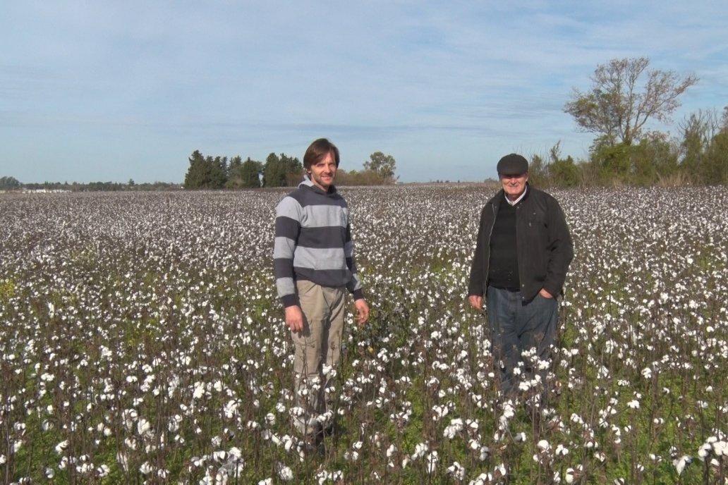 Flavio y Alberto Musso - Productores Algodoneros