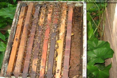 La importancia del manejo integral de las colmenas