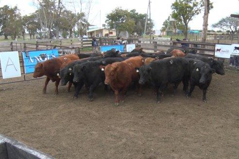 Sin público presente se realizó la 2da. Jura Fenotípica de la 5ta Prueba Pastoril del Litoral