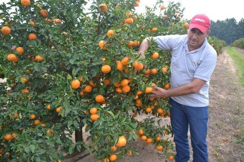 """Dario Toller: """"podemos decir que es un año bueno para la citricultura"""""""