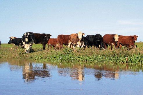 La Mesa de Enlace  defendió la producción como herramienta de sustentabilidad del Delta