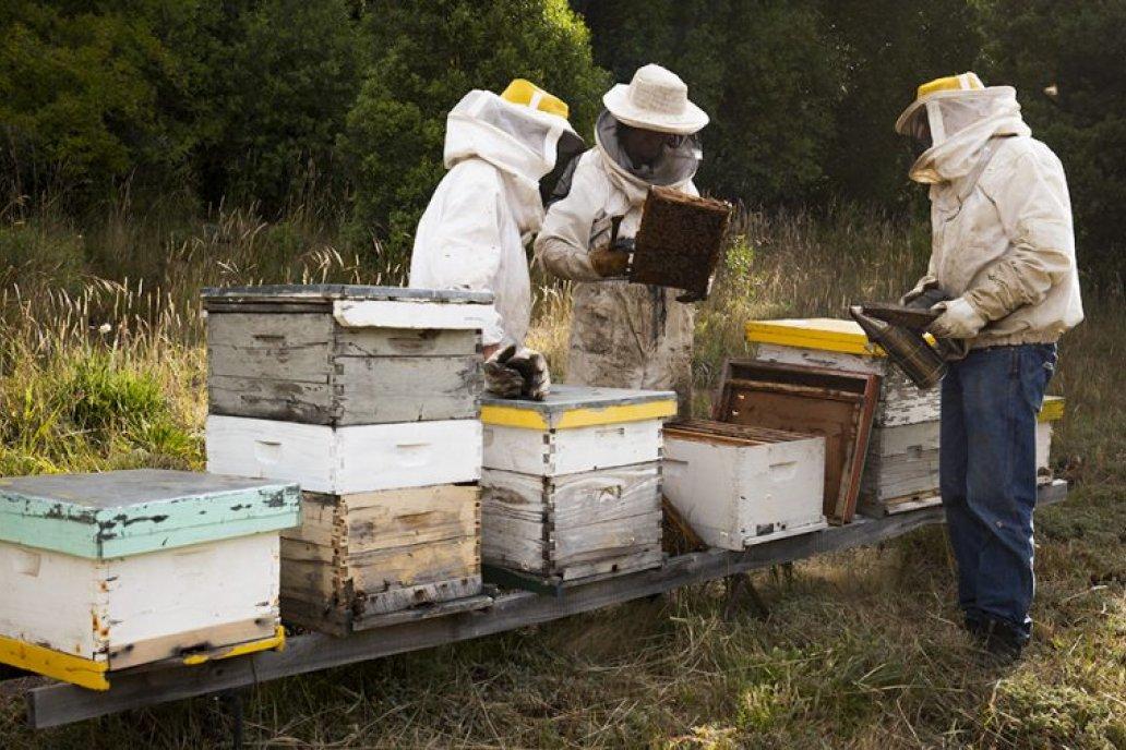 El precio de la miel llega a picos de 300 pesos por kilo y sigue en alza