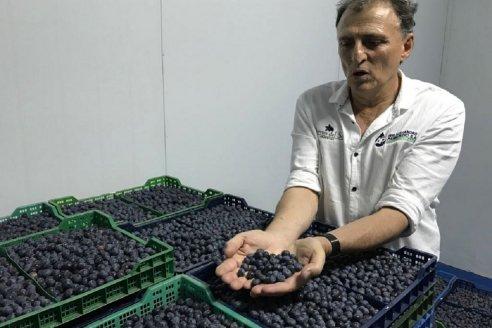 """""""Enfrentar una demanda a nivel mundial que va creciendo"""", el desafío para los arándanos argentinos"""