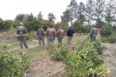 Se eliminaron 9 mil plantas cítricas en Corrientes para prevenir el HLB