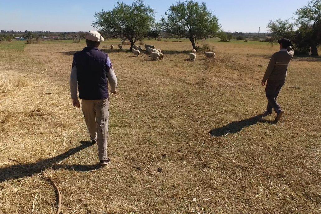 Walter Larocca y Sebastian Lorenzatto - Módulo Didactico de Producción Ovina de la Facultad de Ciencias Agropecuarias de la UNER