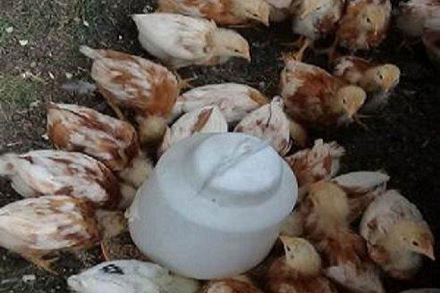 Más huevos para el mercado popular