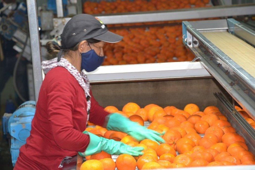 Sanidad y buen aspecto de la fruta, dos premisas innegociables