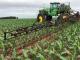 Rigen nuevas reglas para la venta de agroquímicos