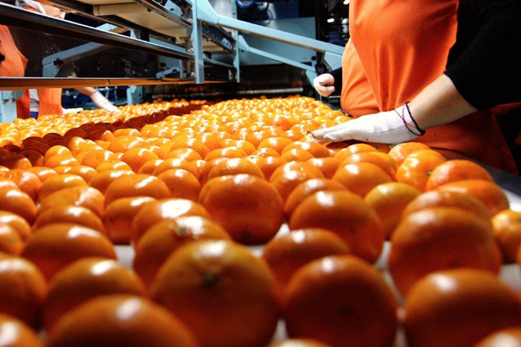 Naranjas y mandarinas tienen una oportunidad si superan enfermedades.