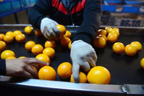 Diputados sancionó la prórroga de la emergencia para el sector citrícola