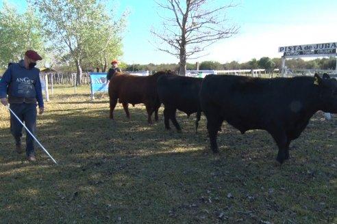 Juras Angus y Ovina de la 76° Muestra Ganadera Sociedad Rural de Federal
