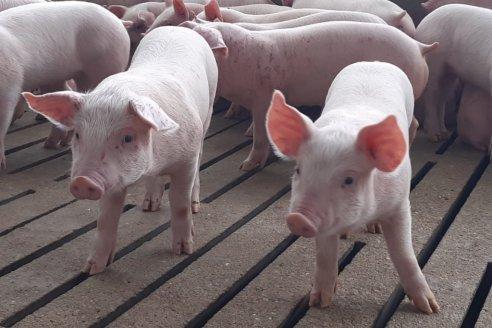 Bioter es la primera empresa argentina que cuenta con una línea de productos 100% libre de antibióticos.