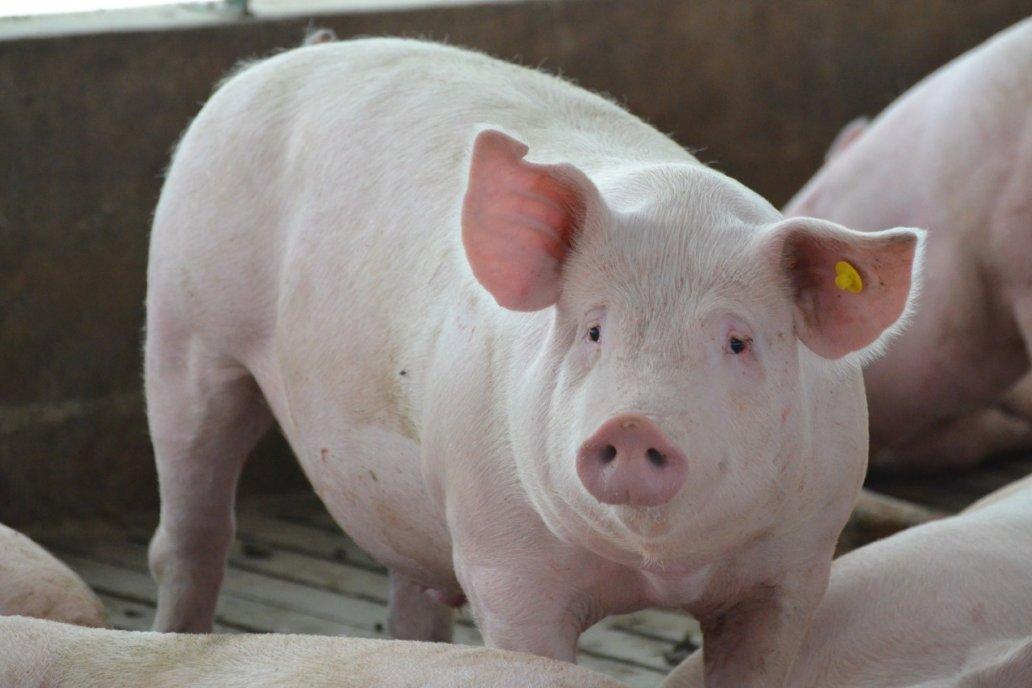 Bioter 1° empresa argentina que cuenta con productos 100% libre de antibioticos