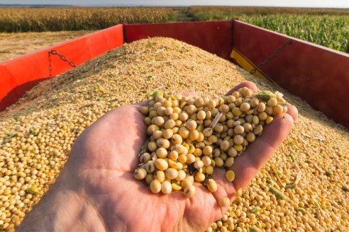Argentina, primer exportador mundial de aceite y harina de soja