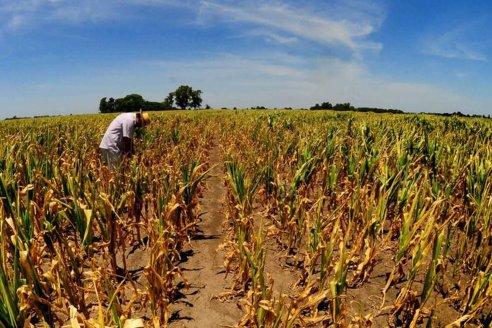 Sequía: FAA reclama una respuesta del Gobierno provincial al pedido de emergencia agropecuaria