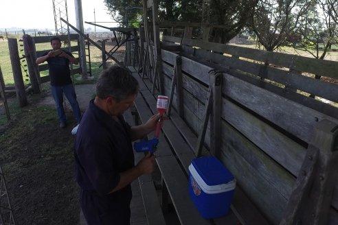 Establecimiento Santa Maria II - Vacunación pre-servicio en un rodeo Braford