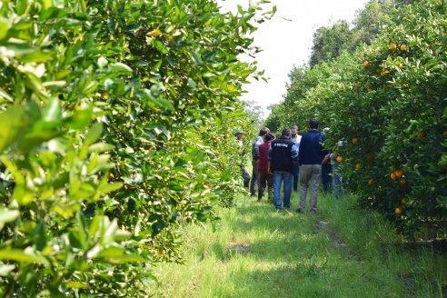 En prevención del HLB se monitorearon quintas citrícolas de los departamentos Concordia y Federación