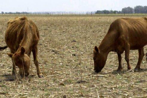 La ganadería tiene su mercado climático