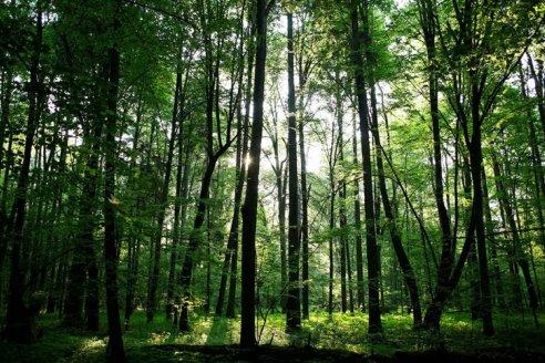 Hasta el 16 de octubre se pueden presentar proyectos de preservación de bosques nativos